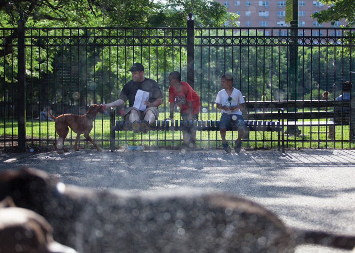 Wicker Park dog park